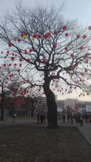 Čínské lampiony na stromě